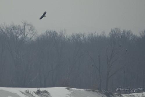 soaring trees 2