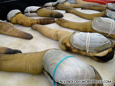 Elephant clams (象拔蚌)