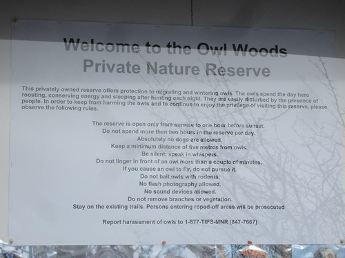 Owl Woods Rules
