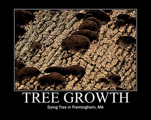 Tree Growths
