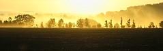 light the dawn (algo) Tags: morning trees sun sunlight mist misty fog sunrise photography dawn interestingness haze topf50 topv555 branches horizon topv222 explore archives algo topf100 frontpage explorefrontpage explore265