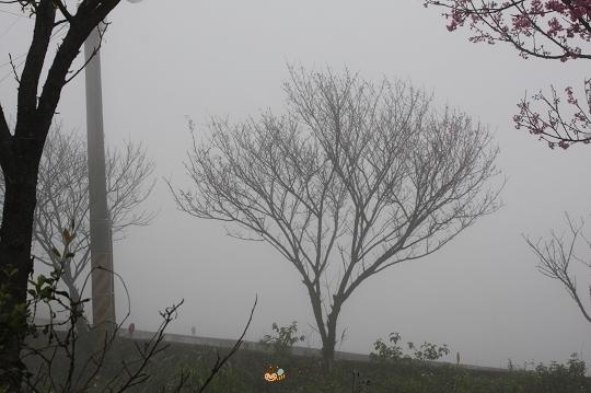 2010.0227天元宮探吉野櫻花況  (26).jpg