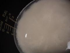 無洗米 あぶくま太陽米
