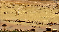 Bird Landing (Behzad No) Tags: life winter sky sun bird birds animal persian duck day iran no dream strong shiraz fars behzad parseh anawesomeshot nikond90 behzadno noorifard