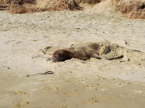 Sea Lion 2/2