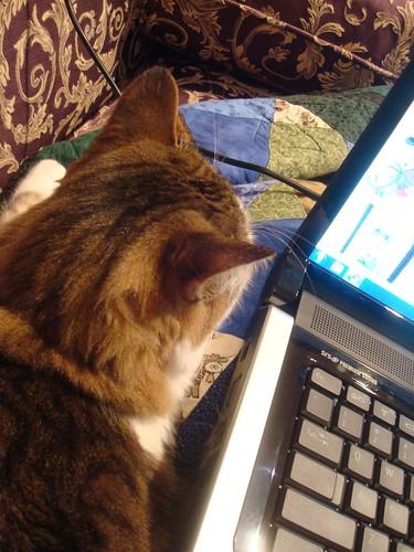 Lappytop Cat