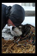 AK-DogDrop2 (black_coyote) Tags: dog alaska race drop sled 2010 iditarod