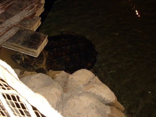 Huge Turtle in Bass Pro