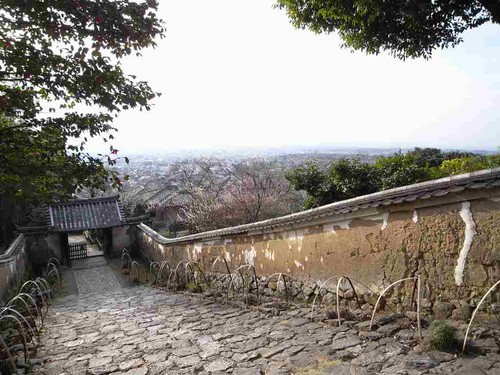 奈良盆地を一望!閻魔様と五色椿の『白毫寺』@奈良市