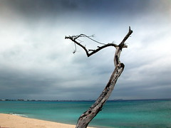 the beauty of the dead tree (Lilian 62) Tags: soe pictureperfect colorphotoaward natureselegantshots 100commentgroup artofimages saariysqualitypictures imagesforthelittleprince nikonflickrawardgold absolutelyperrrfect bestcapturesaoi vividstriking tripleniceshot mygearandmebronze mygearandmesilver mygearandmegold flickraward5 mygearandmeplatinum mygearandmediamond onlythebestofnature nikonflickrawardplatinum dblringexcellence tplringexcellence