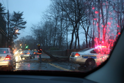 Police re-direct traffic around a downed tree in the middle of the road.