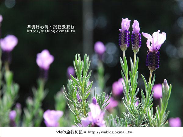 【梅峰農場】不止桃花美!梅峰農場賞花趣~(下)24
