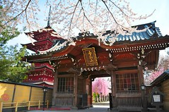 Japan Temple Gate and Pagoda. (Hirosaki Japan).  Glenn Waters.  1,300 visits to this photo.  Thank you. (Glenn Waters in Japan.) Tags: japan temple japanese pagoda spring nikon aomori cherryblossoms hirosaki  japon     d700 nikond700  glennwaters photosjapan