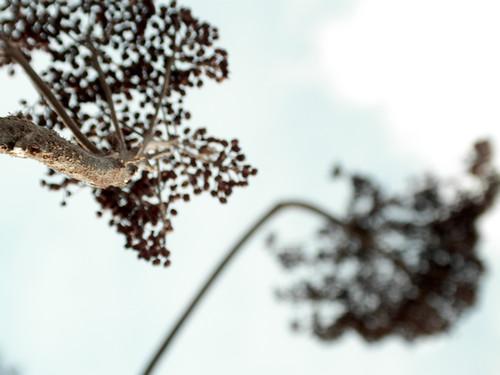 Dry Plant & Sky