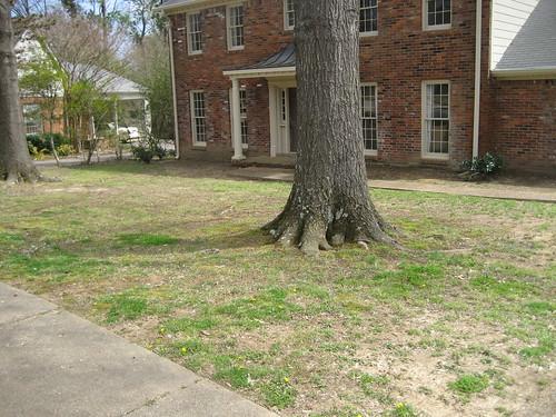 Exterior Front - yard & facade b