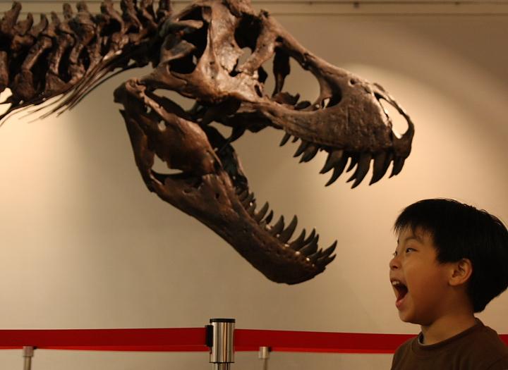 中正廟恐龍展000042