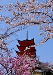 Miyajima Five-Storied Pagoda  Cherry Blossoms[Worldheritage] (h orihashi) Tags: beautiful japan cherry landscape gate shrine niceshot searchthebest pentax hiroshima miyajima 桜 日本 torii soe 風景 worldheritage nationalgeographic itsukushima aphoto aclass 広島 k7 naturesfinest 世界遺産 blueribbonwinner coth 日本三景 supershot bej fineartphotos golddragon flickrsmileys mywinners royalgroup diamondheart platinumphoto anawesomeshot impressedbeauty ultimateshot flickraward crystalaward diamondclassphotographer flickrdiamond flickrbronzeaward citrit excellentphotographerawards diamondstars eperkeaward overtheexcellence colourartaward justpentax theperfectphotographer goldstaraward flickrestrellas cherryontopphotography peaceawards spiritofphotography hatsukaichishi rubyphotographer damniwishidtakenthat mikesdance flickrballoonaward thebeautifulimagetop thebestgallery newenvyofflickr pentaxart pentaxk7