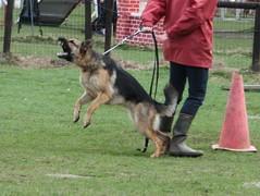 Don't come too close! (Pivi Reijonen) Tags: dog chien expressions bodylanguage hond perro koira ilme reijonen elekieli