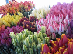 flowers (ekelly80) Tags: seattle flowers colors washington tulips pikeplacemarket