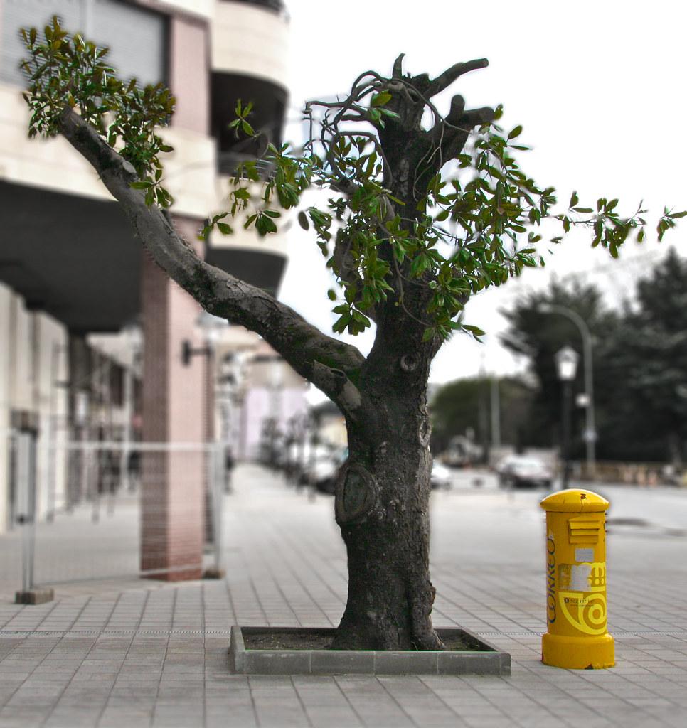 Tree and Mailbox Still Life