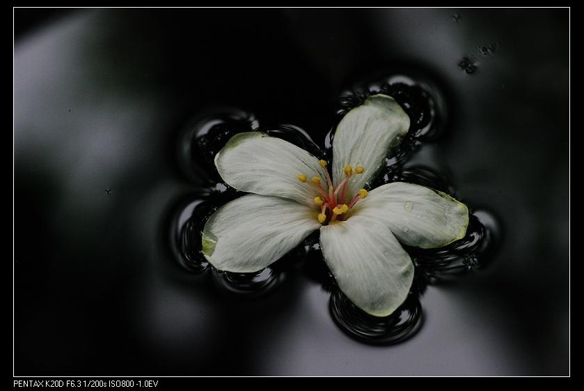 2010/04/18雨天林口拍生態