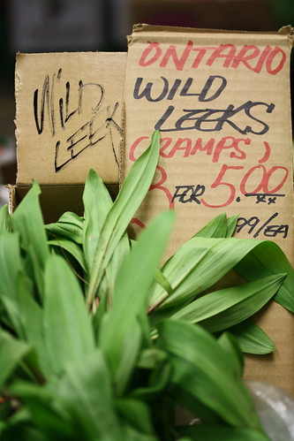 Ontario Ramps, also called Wild Leeks