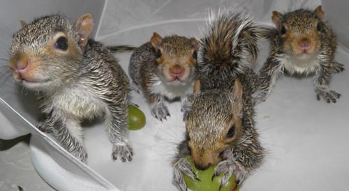 Alvin, Baby Ruth, Benji,  Grover