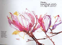 Magnolias..palette knife, water colour and inks. (skyeshell) Tags: flowers line magnolia watercolour freedrawing colouredinks drawingfromaphotograph drawingwithapaletteknife visiblytalented