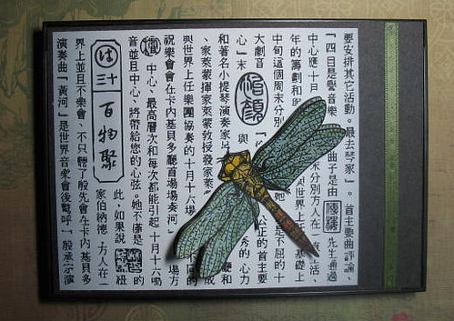 Dragonfly Collage Home Decor
