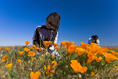 Daughter, Mom, and Flowers (K-Szok-Photography) Tags: california flowers flower canon mom outdoors daughter socal poppy poppies lancaster wildflowers familyfun canondslr californiawildflowers adifferentpointofview flowercolors canon1740f4lusmgroup kenszok