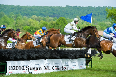Star For Tina jumps a steeplechase hurdle at the Virginia Gold Cup
