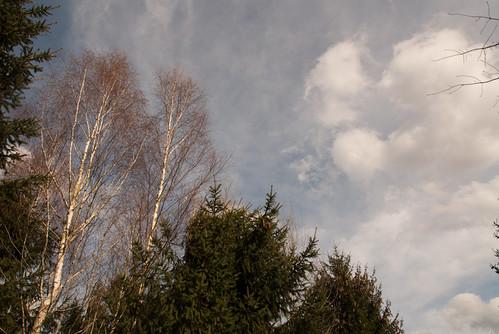 Waldspaziergang - Mischwald