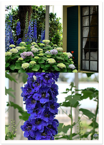 Emily Dickinson's Garden