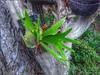 La Planta (HDR) (Fernando Reyes Palencia) Tags: guatemala paisajesdeguatemala bellospaisajesdeguatemala fotosdeguatemala bellaguatemala paisajesdelmundo guatemalalandscapes imagenesdeguatemala guatemalapaisajes postalesdeguatemala