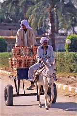 10040162 (wolfgangkaehler) Tags: africa tomato village transport egypt donkey villages transportation farmer cart agriculture villagelife denderaegypt