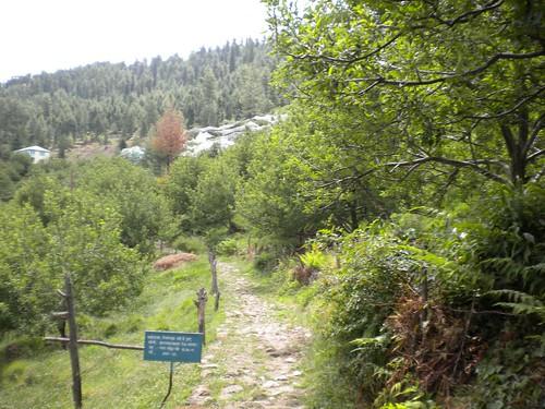 Thanedar - Saroga forest walk