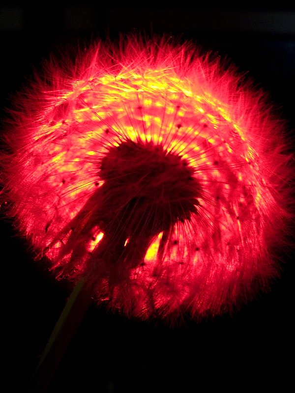 IMAGE: http://farm5.static.flickr.com/4005/4613323694_00528e7ca6_o.jpg
