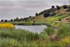 Coyote Hills Regional Park (Jill Clardy) Tags: coyote park county ca weed day cloudy hills 100views wetlands mustard marsh 500views alameda hdr regional 1000views marshes 1406 photomatix tonemapped 1407 1408 regionwide