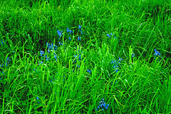 Vivid Grass