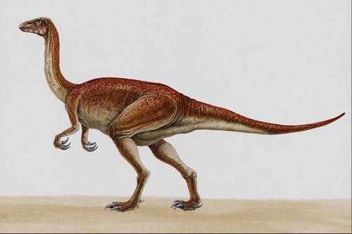 Segnosaurus032