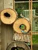 Lazuli Bunting (boisebluebird) Tags: boise boisebluebirdcom httpwwwboisebluebirdcom boiselandscaping boisegardener
