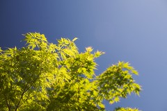 Testing New Toy (Lifecapture) Tags: blue sky tree leaves 35mm ray 14 acer l 5d cpl singh singhray warmingcpl