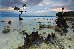 punta 5 (anthonyserafin) Tags: sunset sea shells seascape tree canon landscape ultrawide 5dmk2