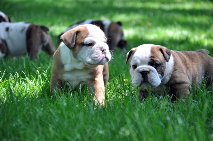 puppies 24