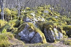 Fort mystrieuse (thomaspollin) Tags: norway forest norge rocks europa europe thomas norwegen steine fort rochers mousse rogaland norvge pollin thomaspollin