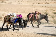 Afghanistan: Beasts of Burden
