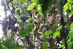 baudchon-baluchon-costa-rica-manuel-antonio-16