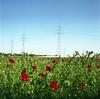 Nature always returns (Andrés Medina) Tags: 6x6 film nature vegetation pro160s zenzanon80mm andresmedina bonicaectl