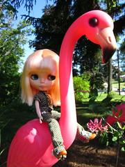 On the flamingo.