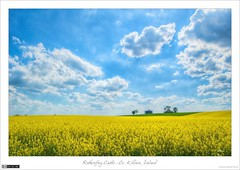Summer Skies over Rathcoffey (bbusschots) Tags: flowers ireland summer sky castle field yellow clouds landscape ruin rape wildflowers agriculture hdr brassica topaz rapeseed kildare localhistory historicbuilding photomatix brassicanapus tonemapped tthdr rathcoffey rathcoffeycastle topazadjust